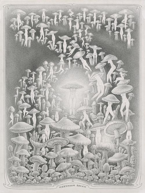 24 MushroomDream_web